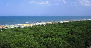 La pineta e il mare