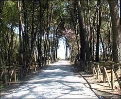 La pineta di Pinarella
